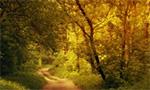 wildernessroad2
