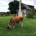 Herds Inn at Hedgebrook Farm